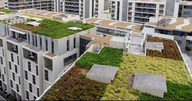 La toiture végétalisée