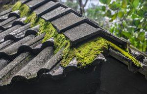 Démoussage de toiture, les conseils de nos experts